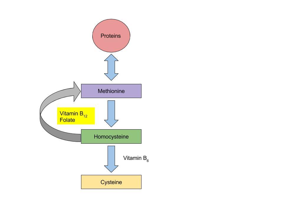 B Vitamins Coenzyme Roles