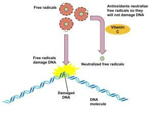 Figure 9.21 Antioxidants' Role