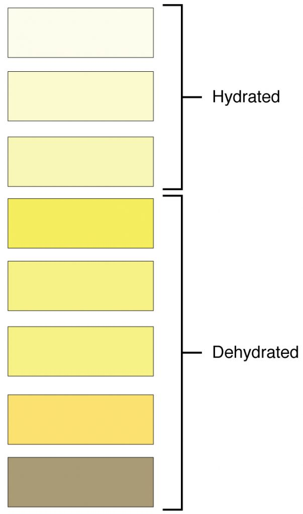 A swatch of eight colors, the first three colored pale yellow indicating a hydrated person, the last five darker yellow and somewhat brown indicating a dehydrated person.