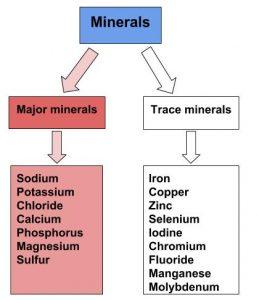 List of major minerals (Sodium, Potassium, Chloride, Calcium, Phosphorous, Magnesium, Sulfur) and trace minerals (Iron, Copper, Zinc, Selenium, Iodine, Chromium, Fluoride, Manganese, Molybdenum)
