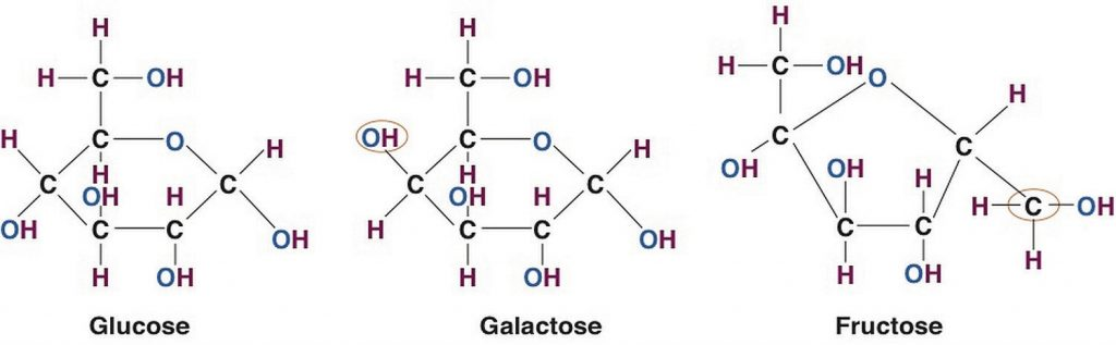 Structures of the Three Most Common Monosaccharides: Glucose, Galactose, and Fructose