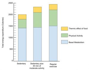 The Effect of Physical Activity on Energy Expenditure