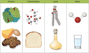 illustration of molecular structures and examplse of the 4 essential macronutrients needed for nutrition: proteins (cheese, eggs, meat), carbohydrates (slice of bread), lipids (a flask of oil), water (glass of water)