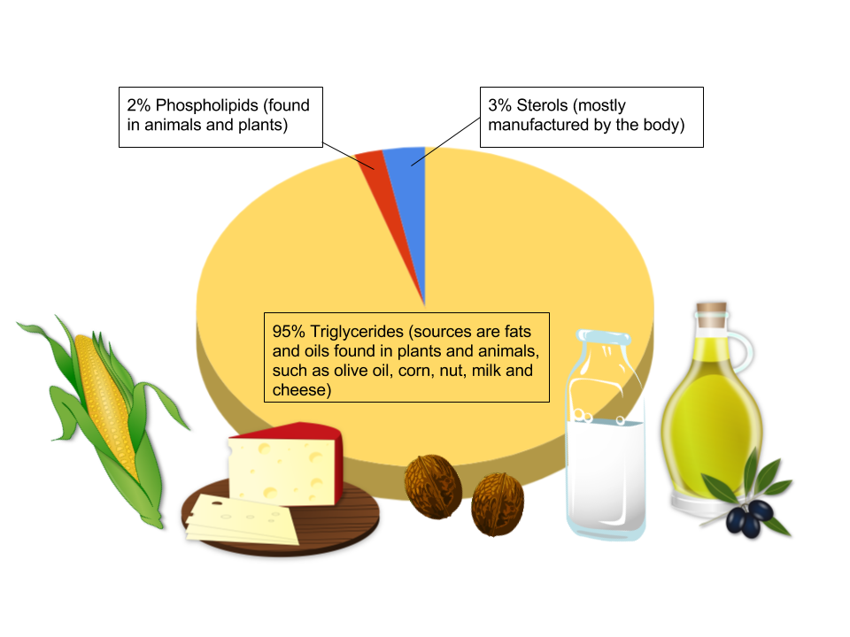A pie chart showing that 95% of Triglycerides sources are fats and oils found in plants and animals, such as olive oil, corn, nut, milk and cheese, 3% sterols (mostly manufactured by the body). Example images include: corn, cheese, nuts, milik, and oil.
